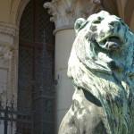 Lion8